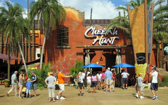 Cheetah Hunt   Busch Gardens Tampa