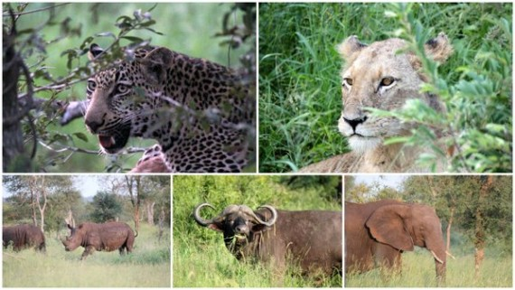 The Big Five - Kruger National Park