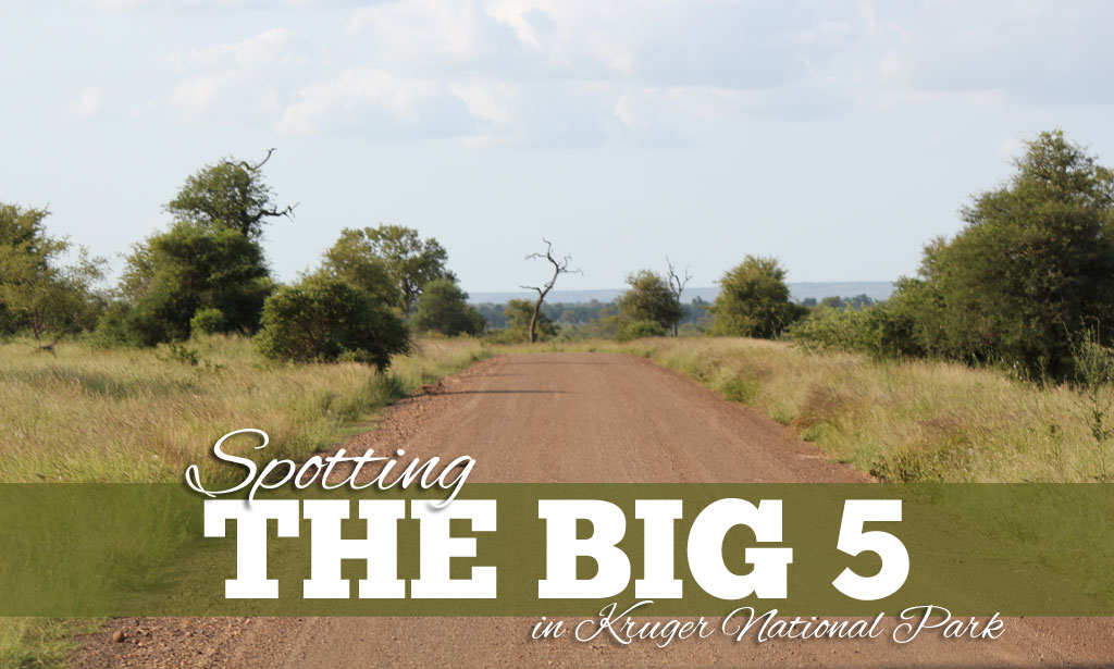 Big Five Kruger National Park