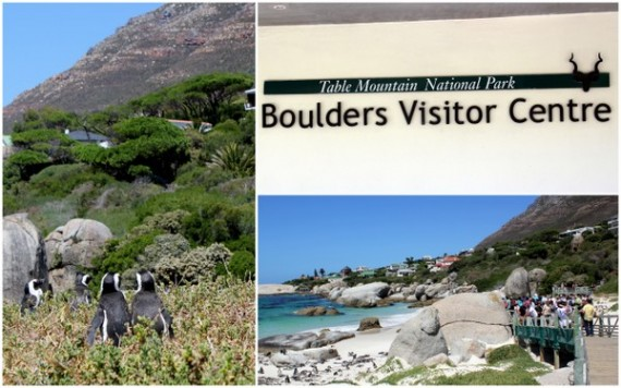 Boulder's Beach - Cape Peninsula - South Africa