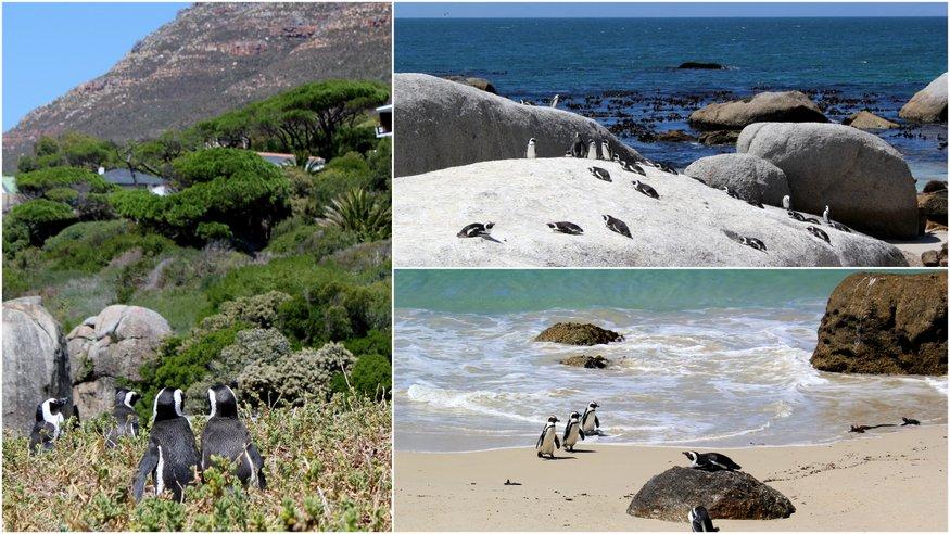 The Cape Peninsula in Photos