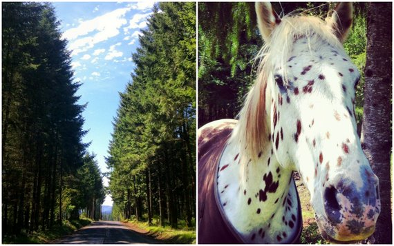 Long winding roads and horses grazing