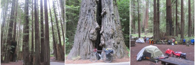 Pacific Coast Bike Tour Day 20: Eureka to the Avenue of Giants