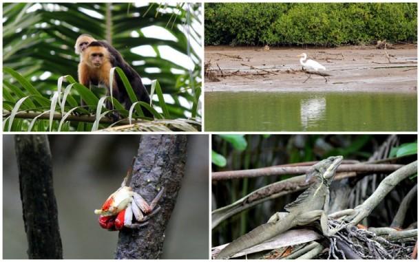 Damas Island Wildlife