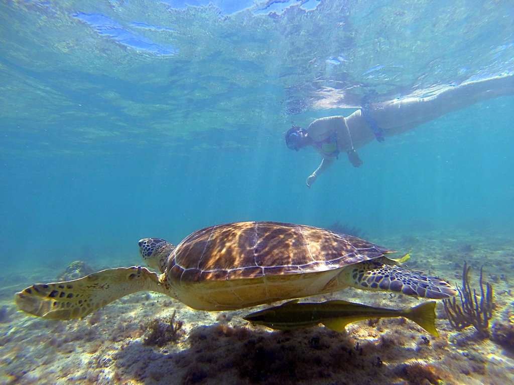 Swimming with Sea Turtles in Akumal