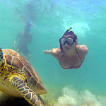 Swimming with Sea Turtles in Akumal
