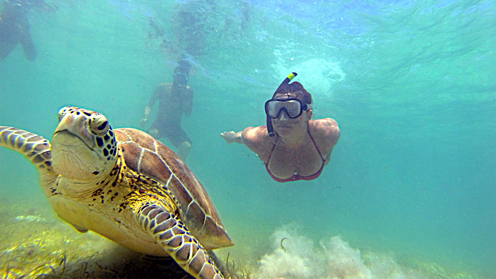 The Complete Guide to Swimming with Sea Turtles in Akumal!