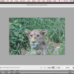 Adobe Photoshop Elements Shake Reduction Tool