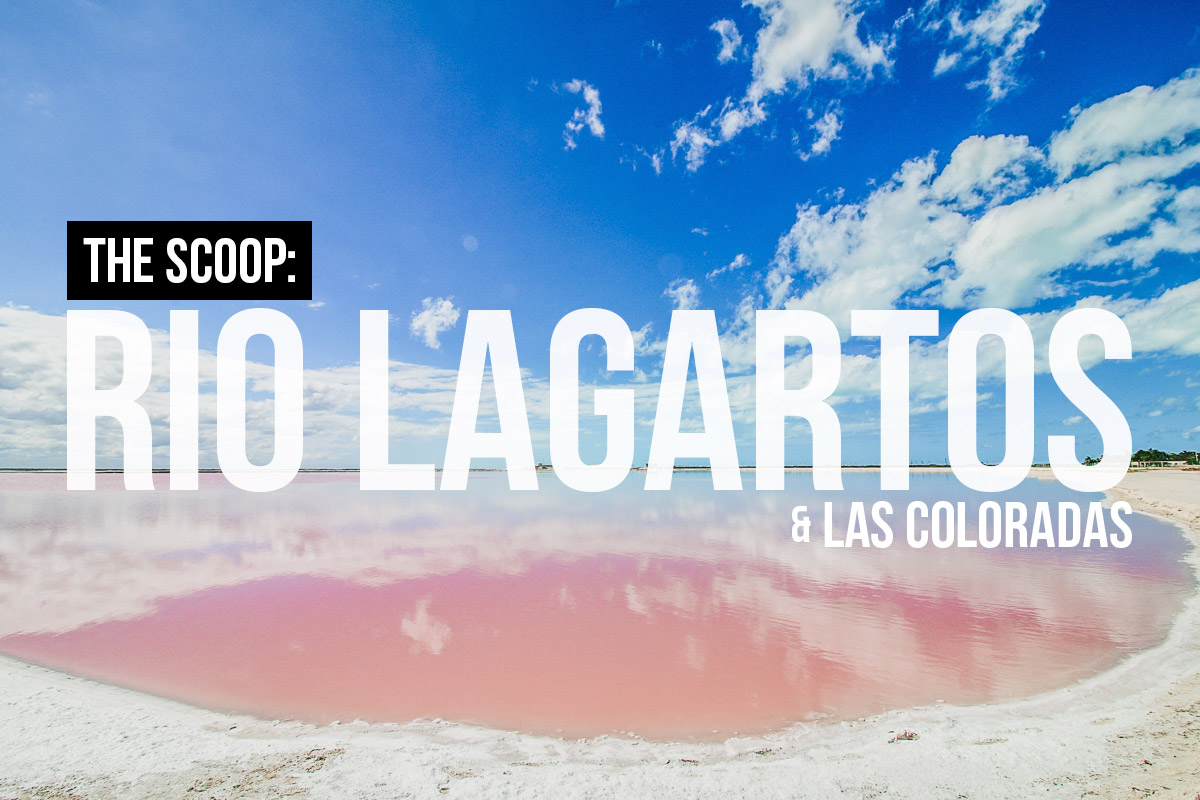The Scoop: A Short Travel Guide to Rio Lagartos & Las Coloradas