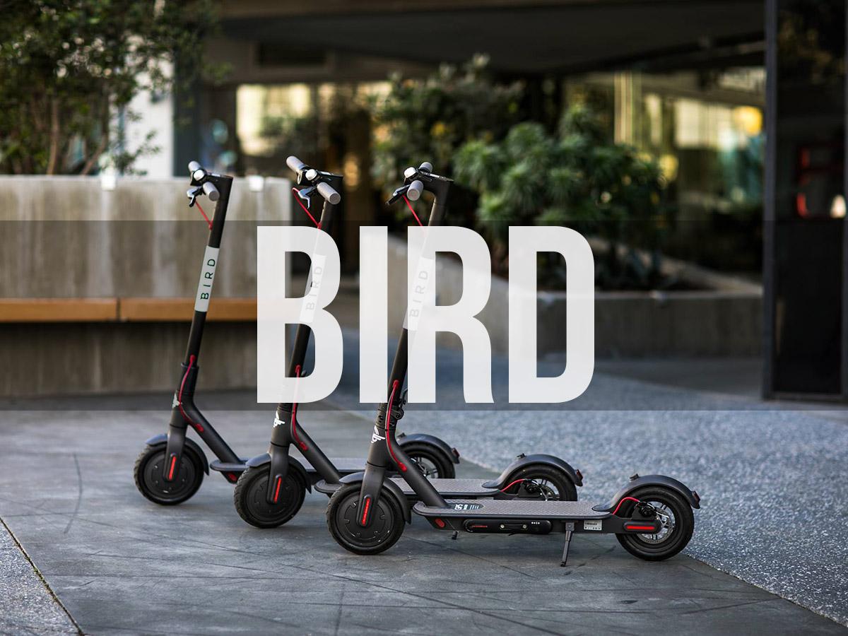Bird Scooters CDMX