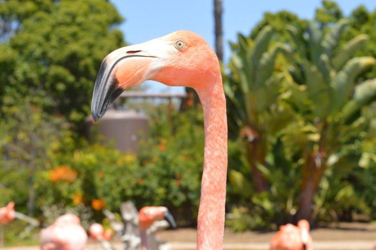 Flamingos Isla Holbox