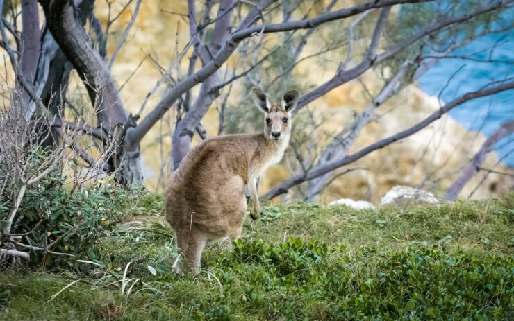 Australia's Best Animals: Local favourites and where to find them
